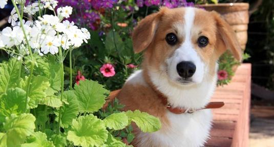 Aromaterapia u psov