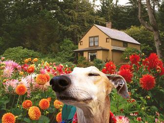 Aj psi majú radi vôňu